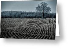 Farmfield Furrows Greeting Card