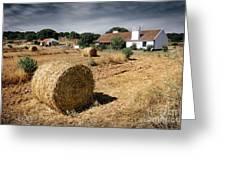 Farmland Greeting Card by Carlos Caetano