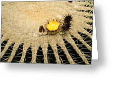Fascinating Cactus Bloom - Soft And Fragile Among The Thorns Greeting Card