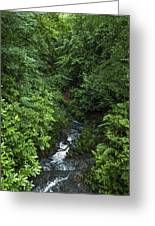 Fast River Greeting Card