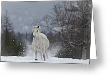 Fast Traveling Greeting Card