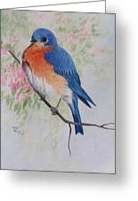 Fat And Fluffy Bluebird Greeting Card