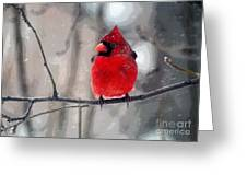 Fat Cardinal In The Snow Greeting Card