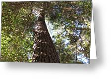 Father Pine Greeting Card