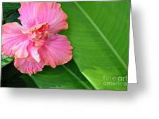 Favorite Flower 2 Greeting Card