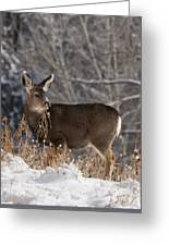 Fawn Eating Greeting Card