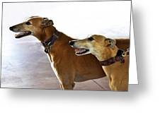 Fawn Greyhound Dogs Profile Greeting Card