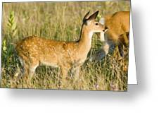 Fawn In Big Meadows Greeting Card