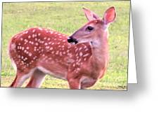 Fawn In The Waning Summer Greeting Card