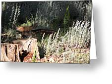 Fawn Front Yard Divide Co Greeting Card