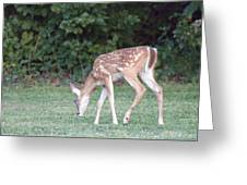 Fawn Meadow Greeting Card