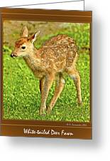 Fawn Poster Image Greeting Card