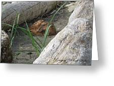 Fawn Resting On Beach Greeting Card