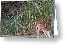 Fawn Snacking Greeting Card