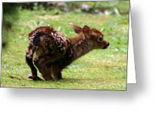 Fawn's First Steps Greeting Card