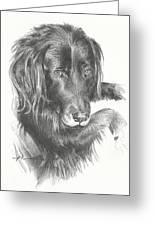 Black Dog Laying Pencil Portrait Greeting Card