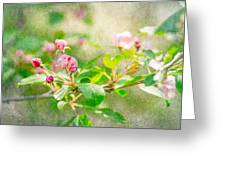 Feast Of Life 20 - Morning Mists Greeting Card