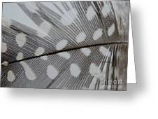 Feather 1 Greeting Card