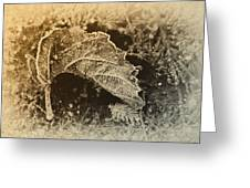 Feather And Leaf Greeting Card