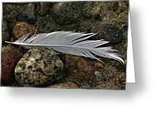 Feather And Rocks Greeting Card
