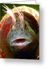Feather Blenny - A Fish  Greeting Card