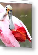 Feather Care Greeting Card