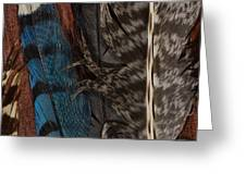 Feather Collection Greeting Card