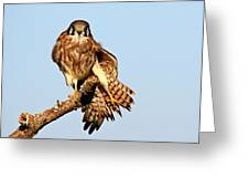 Feather Display Greeting Card
