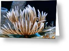 Feather Duster Worms 2 Greeting Card