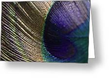 Feather Fan Greeting Card