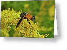 Feather-legged Fly On Goldenrod - Trichopoda Greeting Card