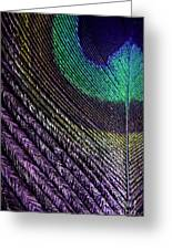 Feather Of A Different Color Greeting Card