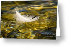 Feather On Golden Water Greeting Card