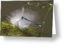 Feather Perch Greeting Card