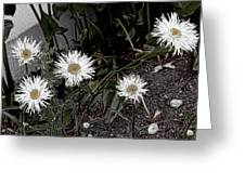 Feathered Daisy  Greeting Card