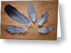 Feathers And Old Letter Greeting Card