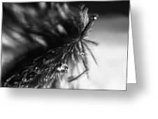 Feathery Drop Greeting Card