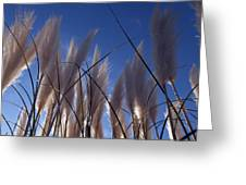 Feathery Greeting Card