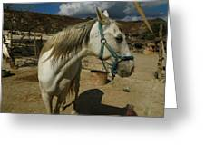 Featured Cute Friend In The Mountain Spain  Greeting Card