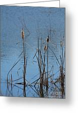February Cattails Greeting Card
