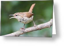 A Wren's Song Greeting Card