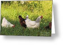 Feeding Chickens Greeting Card