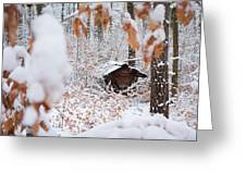 Feeding Site In The Forest In Winter  Greeting Card