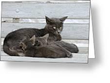 Feeding The Kittens Greeting Card