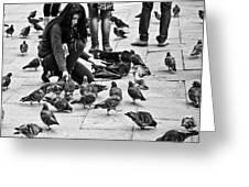 Feeding The Pigeons Greeting Card