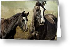 Feldspar And Ohanzee  - Pryor Mustangs Greeting Card by Belinda Greb