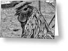 Felicia's Raving Rooster Greeting Card