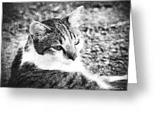 Feline Pose Greeting Card