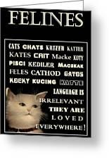 Felines   - Poster  Greeting Card