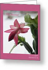 Feliz Navidad Pink Christmas Cactus Photo Greeting Card  Greeting Card